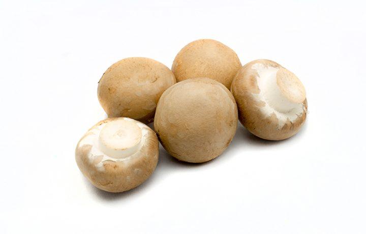 Fresh mushroom Neofungi
