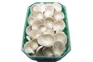Oysters Neofungi