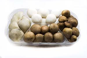Mini mushroom selection Neofungi